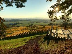 Prestige Wine Tours