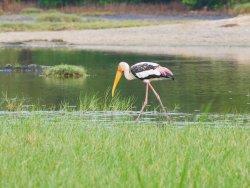 Kalametiya Eco Bird Watching