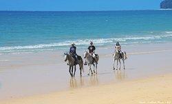South Arabian Horse Club