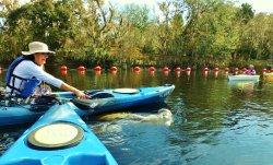 Kayak Florida - Manatee Tours Orlando