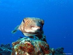 Sea-Urchin Diving Center