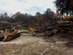 clearing up after the bushfire