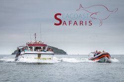 Seacoast Safaris