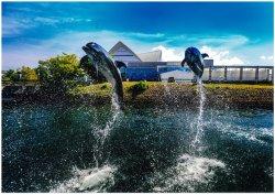 鹿儿岛水族馆