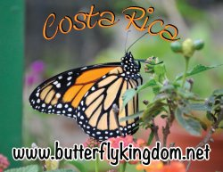 Mariposario Butterfly Kingdom Costa Rica