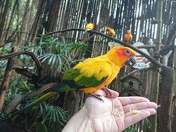 Phuket Bird Paradise