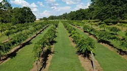 Wolf Creek Plantation Winery