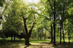 Zemunski Park