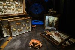 Museum d'Histoire Naturelle de Bourges