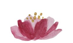 Our Red Lily logo is one of the Aust Bush Flower essences.Grounded and mindful in the present mo
