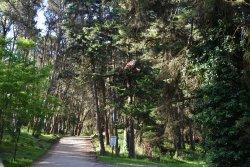 Bosque del Vivero