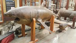 Museo di Zoologia ed Anatomia Comparata