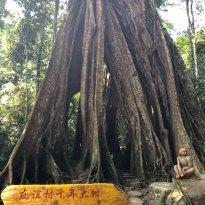 ปิยะมิตร ต้นไม้พันปี