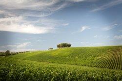 Tolaini Winery