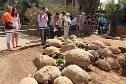 People looking at African Sulcata Tortoise's on a tour