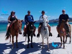 Pacific Horses