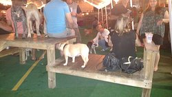 Sit. Stay. Drink. Dog Lover's Happening.