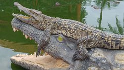 Blue Sky Crocodile Land (Long Xuyen Crocodile)