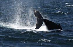 Whale Samana