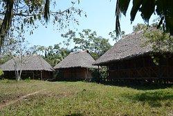Amazon Shelter