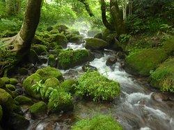 Kitanizawa Stream