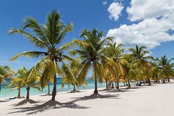 Coconut palm trees, Isla Saona.