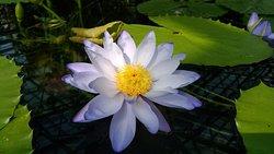 Aquatic Plants Garden Mizunomori
