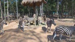 珍珠王国野生动物园