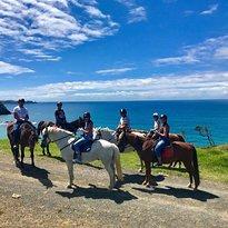 Sandy Bay Horse