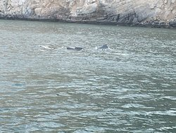 Small pod of dolphins