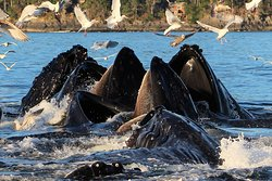 A Whale's Song Expeditions