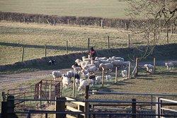 Coed Parc Farm Bed & Breakfast