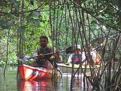 La mangrove du Marin: découverte, écotourisme et pédagogie