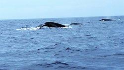 Same whale pod