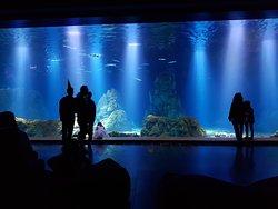Israel Aquarium