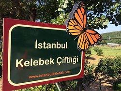 Istanbul Kelebek Ciftligi