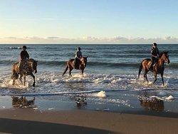 Centre Equestre de Blonville Sur Mer