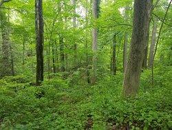 Pequonnock River Trail