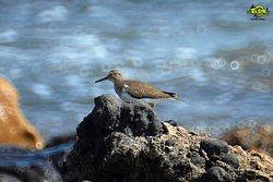 #tour #birwatching #turismo #ornitologico #aves #uccelli #migratori #migration