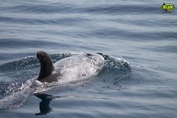 #tour #whalewatching #ballenas #delfines #delfini #balene #dolphins