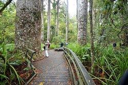 Puketi Nature Trail