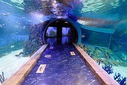 Oceanarium Crocus City
