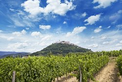 Benvenuti Winery
