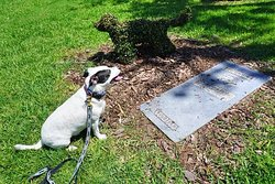 Brownie the Town Dog Grave and Memorial
