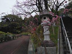 Motobu Yaedake Cherry Blossom Matsuri