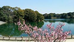 Sori Pond