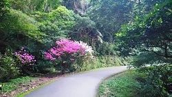 Baiji Shaded Trail