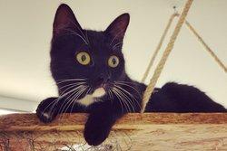 Dreamcatchers Cat adoption Cafe and Shop