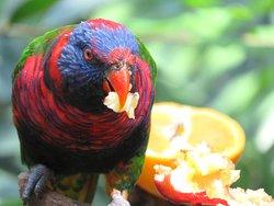 Edward Youde Aviary
