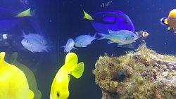 Achill Experience, Aquarium & Visitor Centre